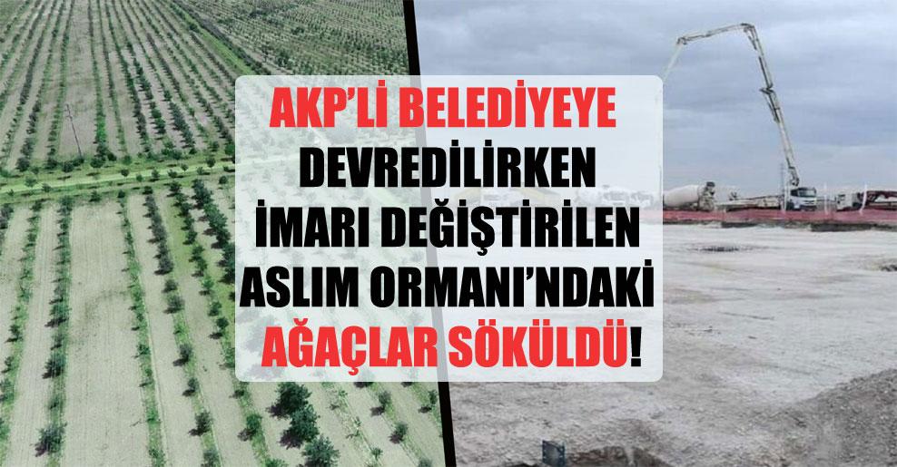 AKP'li belediyeye devredilirken imarı değiştirilen Aslım Ormanı'ndaki ağaçlar söküldü!
