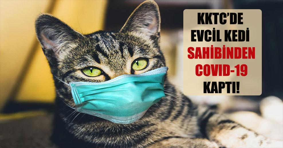 KKTC'de evcil kedi sahibinden COVID-19 kaptı!