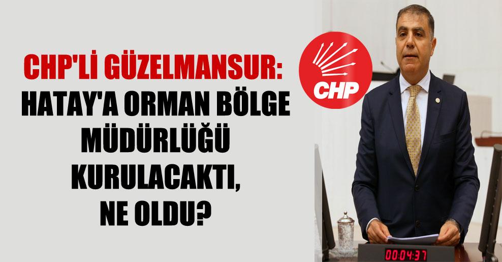 CHP'li Güzelmansur: Hatay'a orman bölge müdürlüğü kurulacaktı, ne oldu?