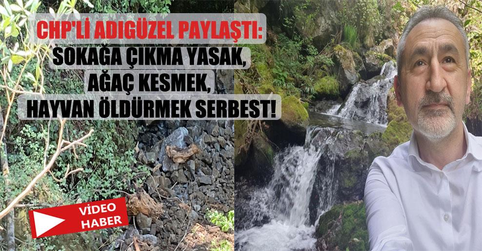 CHP'li Adıgüzel paylaştı: Sokağa çıkma yasak, ağaç kesmek, hayvan öldürmek serbest!