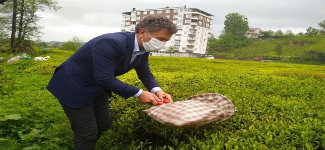CHP'li Sarıbal: Mevcut Çay Kanunu yetersiz!