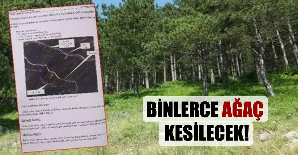 Binlerce ağaç kesilecek!