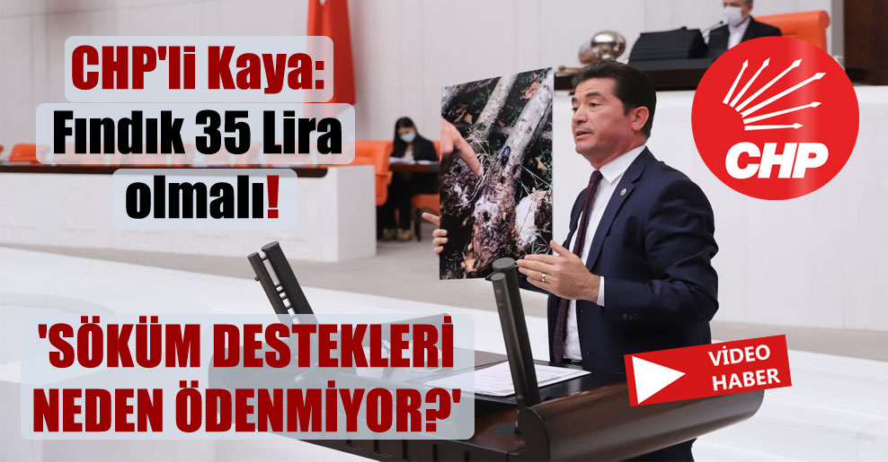 CHP'li Kaya: Fındık 35 Lira olmalı! 'Söküm destekleri neden ödenmiyor?'