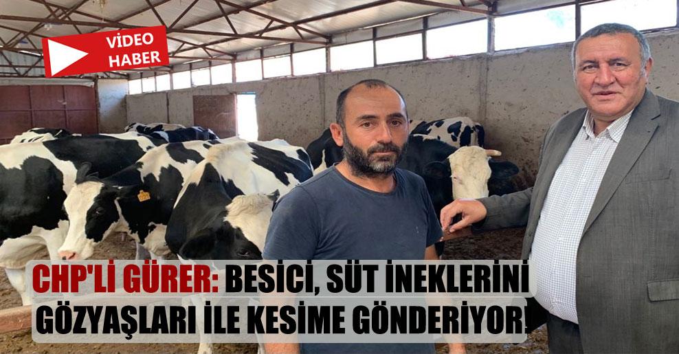 CHP'li Gürer: Besici, süt ineklerini gözyaşları ile kesime gönderiyor!