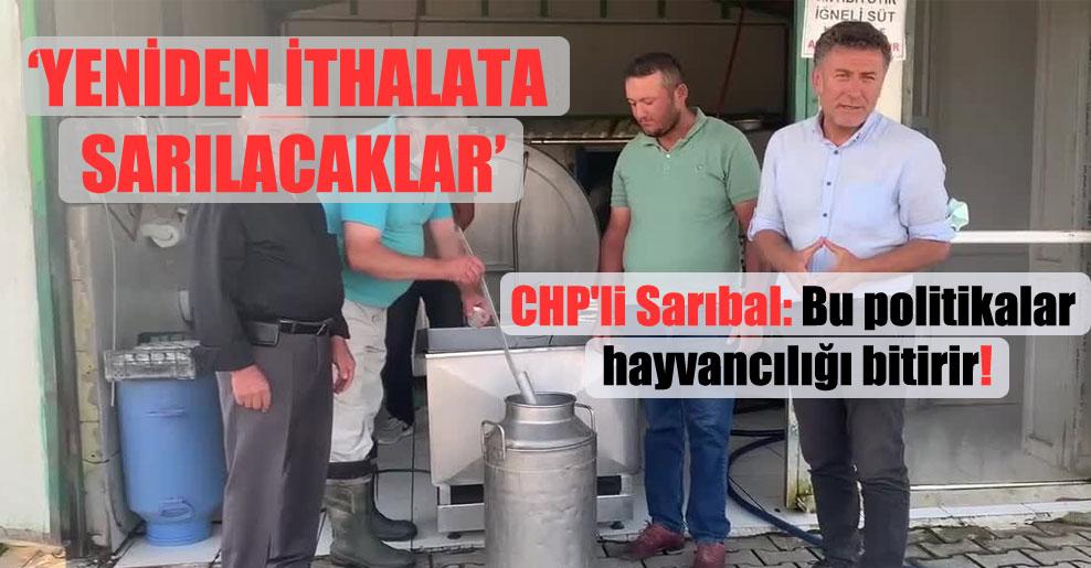 CHP'li Sarıbal: Bu politikalar hayvancılığı bitirir!