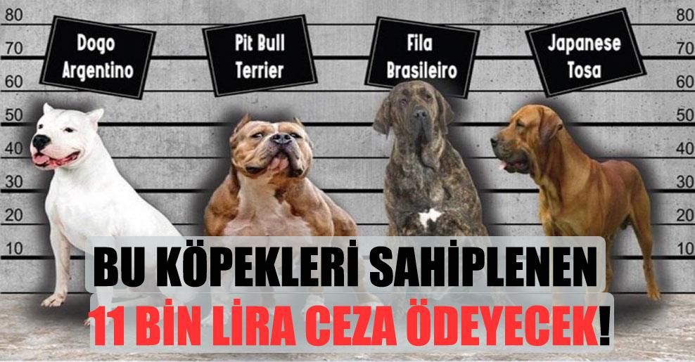 Bu köpekleri sahiplenen 11 bin Lira ceza ödeyecek!