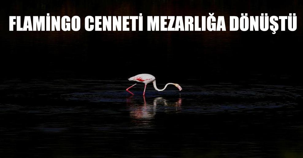 Flamingo cenneti mezarlığa dönüştü