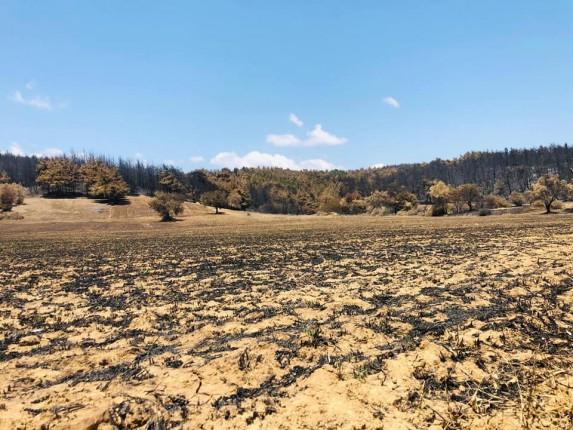 gelibolu orman yangını 2