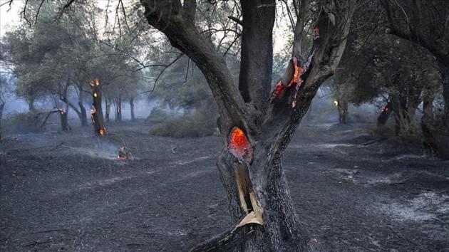 gelibolu orman yangını 5