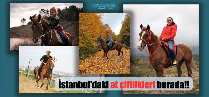 İstanbul'daki at çiftlikleri burada!!