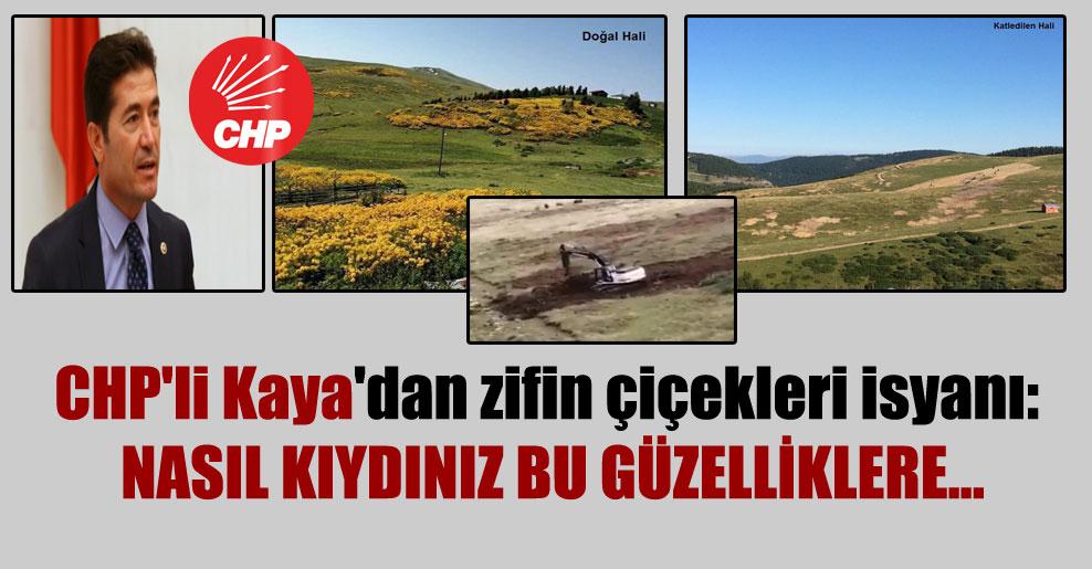 CHP'li Kaya'dan zifin çiçekleri isyanı: Nasıl kıydınız bu güzelliklere…