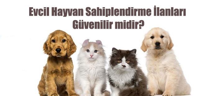 Evcil Hayvan Sahiplendirme İlanları Güvenilir midir?