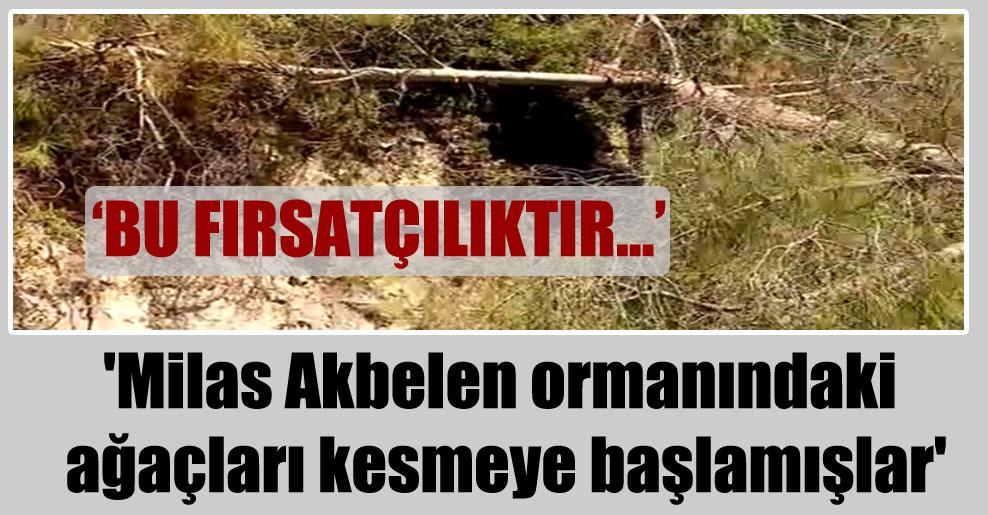 'Milas Akbelen ormanındaki ağaçları kesmeye başlamışlar'
