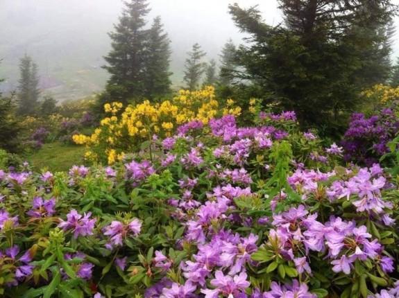 zifin çiçekleri (3)