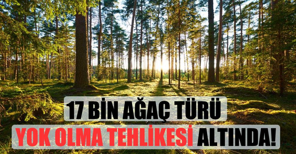 17 bin ağaç türü yok olma tehlikesi altında!