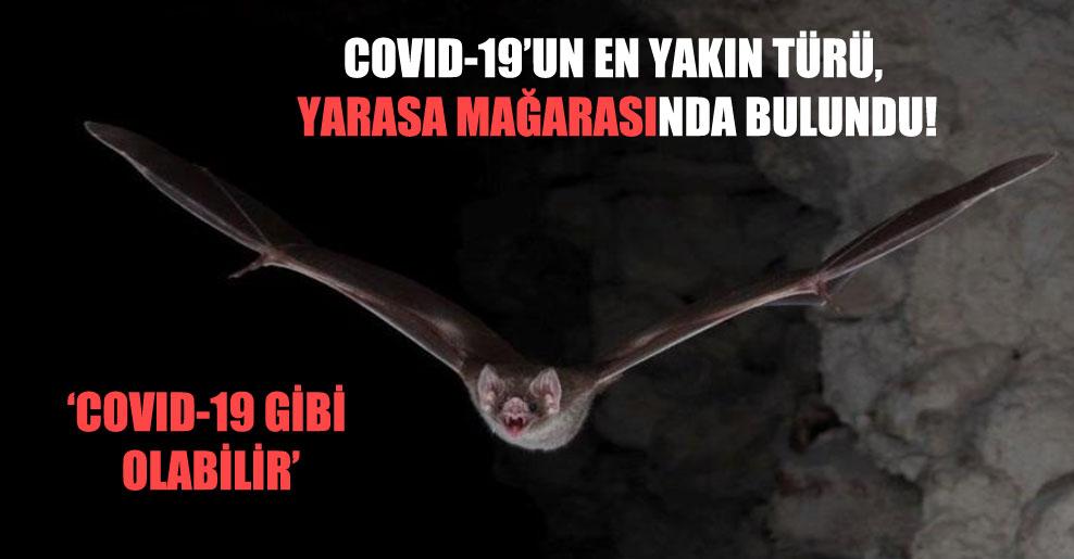 Covid-19'un en yakın türü, yarasa mağarasında bulundu!